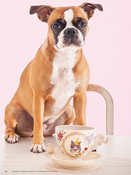 Bull-dog with Cat-Bird party animal tea cup, 2012